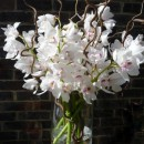 Large vase of white cymbidium orchids and contorted willow