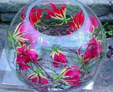 Gloriosa fish bowl