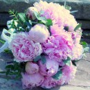 Lightly fragrant bridal bouquet of large blowsy 'Sarah Bernhardt' peonies