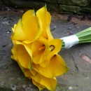 Hand tied wedding bouquet of bright yellow calla lilies.
