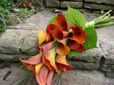Mango Calla Lily over-arm bridal bouquet