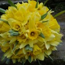 Simple, spring wedding bouquet of bright yellow daffodils