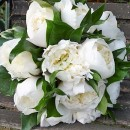 Hand tied bridal bouquet of lightly scented white peonies.