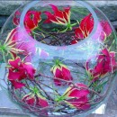 Gloriosa fish bowl