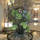 Large arrangement of anthuriums and willow